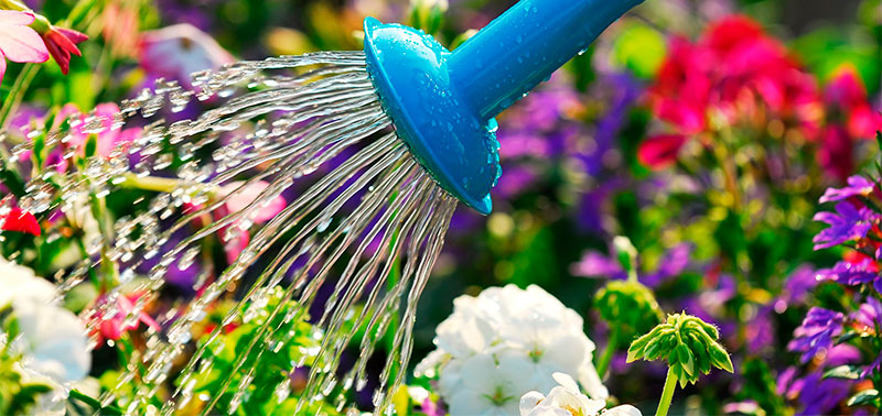 El jardín se debe regar en las tardes