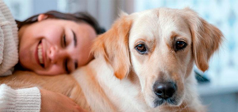 Una mascota otorga muchos beneficios