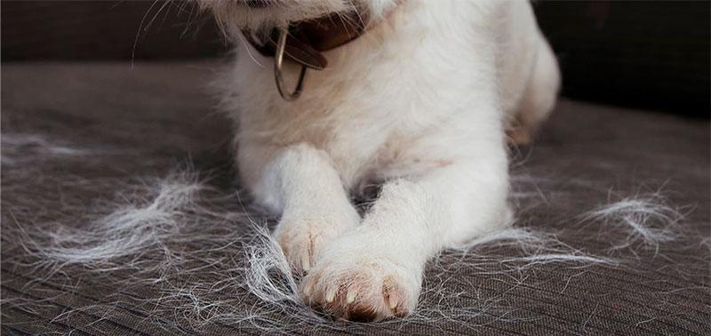 El pelo de las mascotas se adhiere a la ropa